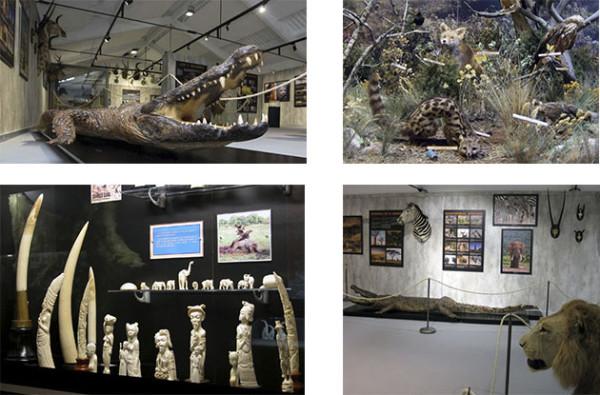 Museo_Biodiversidad